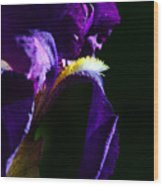 Purple Iris 2 Wood Print