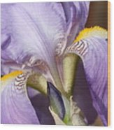 Purple Iris Beauty Wood Print