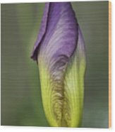 Purple Iris Bud Wood Print