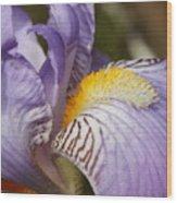 Purple Iris Closeup Wood Print