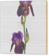 Purple Iris Duet Wood Print