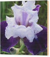 Purple Iris Flower Art Prints Garden Floral Baslee Troutman Wood Print