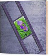 Purple Iris Passion Wood Print