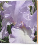 Purple Irises Artwork Lavender Iris Flowers 13 Botanical Floral Art Baslee Troutman Wood Print
