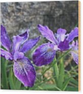 Purple Irises With Gray Rock Wood Print