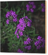 Purple Kiss Wood Print