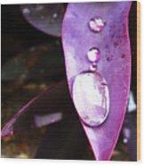 Purple Leaf Wood Print