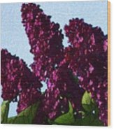 Purple Lilac 3 Wood Print