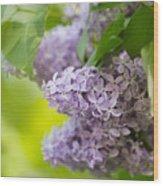 Purple Lilac Wood Print