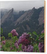 Purple Lilacs Flatirons Wood Print