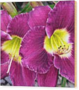 Purple Lilies Wood Print