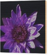 Purple Lily Monet Wood Print