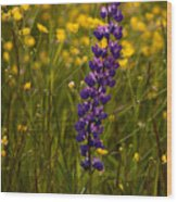 Purple Lupin And Buttercups Wood Print