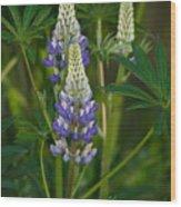 Purple Lupine Wood Print