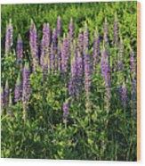 Purple Lupines In Summer Wood Print