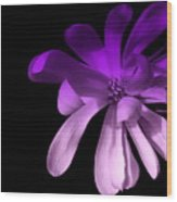 Purple Magnolia 2 Wood Print