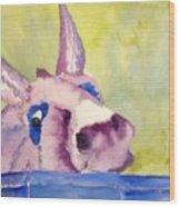 Purple Mule Wood Print
