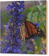 Purple Monarch Wood Print
