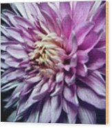 Purple Mum Wood Print