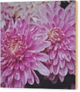 Purple Mums Wood Print