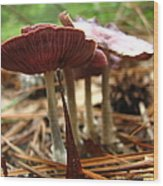 Purple Mushroom 2 Wood Print