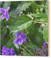 Purple On Green With Raindrops Wood Print