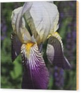 Purple On Purple Iris Wood Print