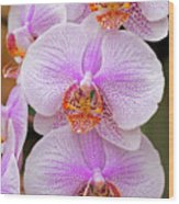 Purple Orchid 1 Wood Print