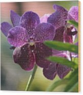 Purple Orchid Beauty Wood Print
