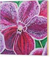 Purple Orchid bloom Wood Print