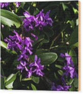Purple Orchid Plant Wood Print