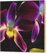 Purple Orchids 2 Backlit Wood Print