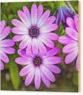 Purple Pals Wood Print