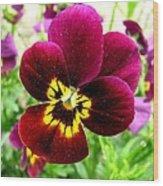 Purple Pansy Wood Print