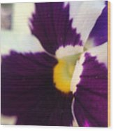 Purple Pansy Wood Print