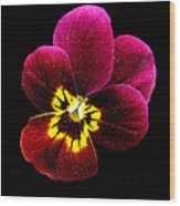 Purple Pansy On Black Wood Print