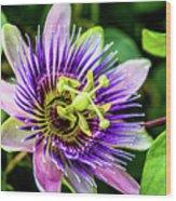 Purple Passion Bloom Wood Print