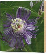 Purple Passion Flower Wood Print