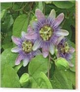 Purple Passion Vine Wood Print