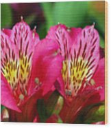 Purple Peruvian Lily Wood Print