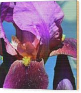 Purple Petals Four  Wood Print