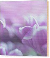 Purple Petals. Gentle Floral Macro Wood Print