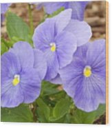 Purple Petunia  Wood Print