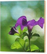 Purple Petunia On A Cool Spring Day Wood Print