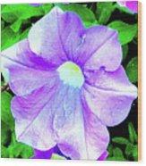 Purple Petunias 2 Wood Print