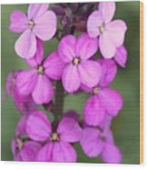Purple Pink Flower.... Wood Print