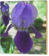 Purple Pleaser Wood Print