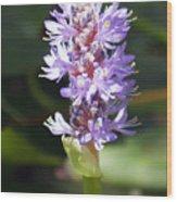 Purple Pond Stem Wood Print