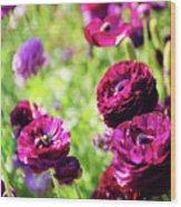 Purple Poppies Wood Print