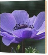 Purple Poppy Mona Lisa Wood Print
